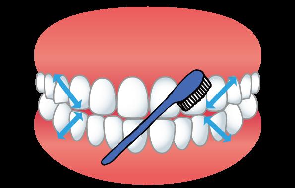 歯ブラシを動かす方向