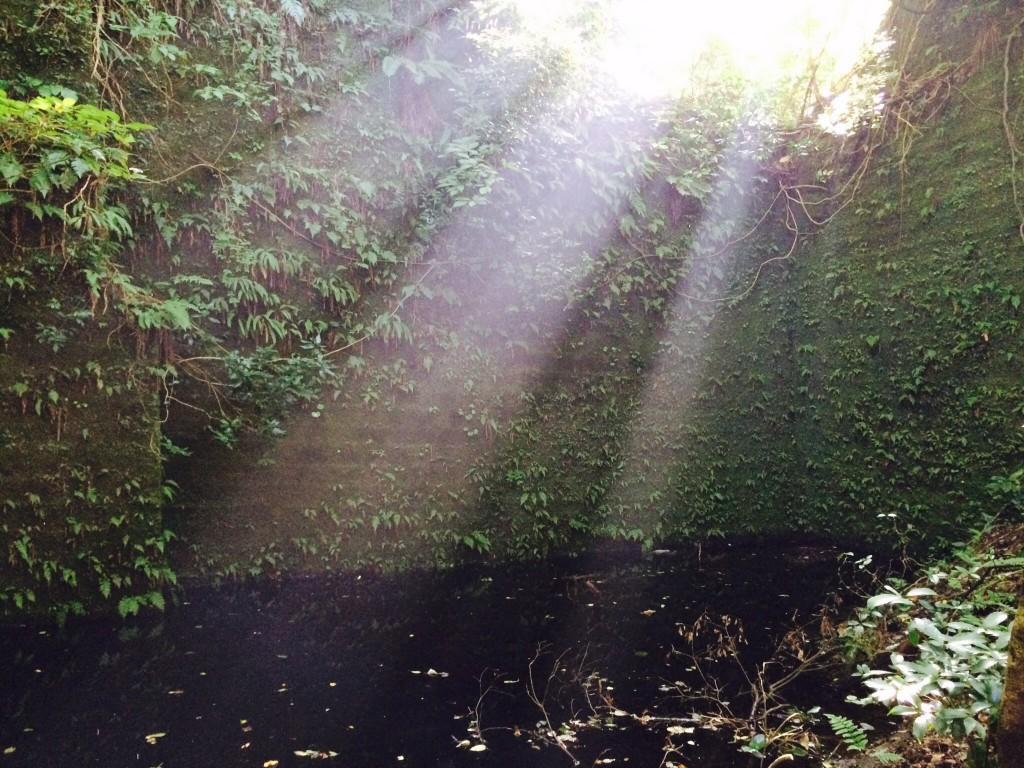 モリアオガエルの池