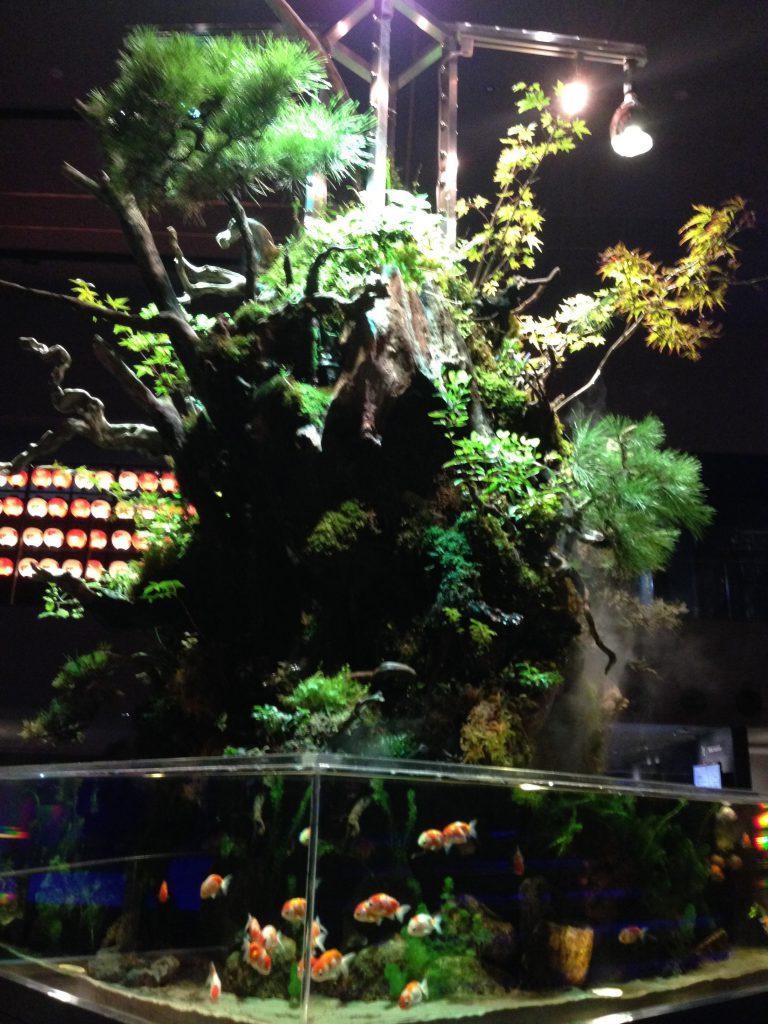 金魚と盆栽