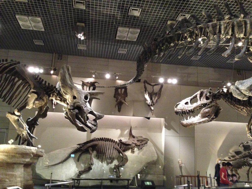 恐竜の対峙