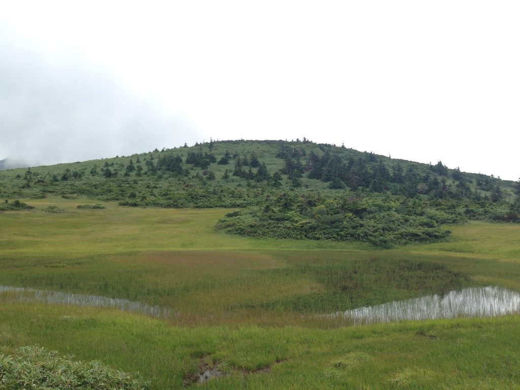 たもやち湿原