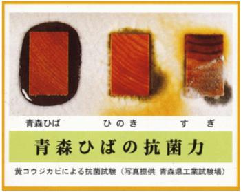 青森ヒバの抗菌力